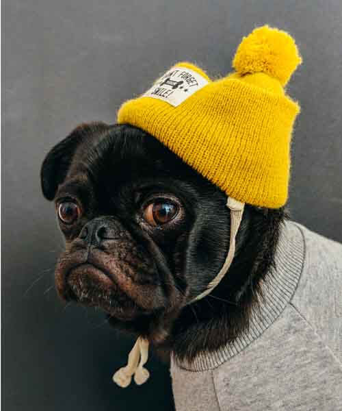 Dog, yelow hat