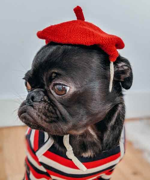 Dog, red hat